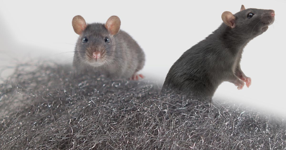 Steel wool against mice, rats and other rodents